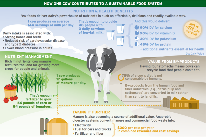 how one cow contributes to sustainable food systems